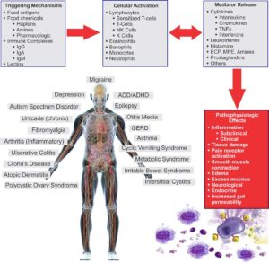 How-Food-Sensitivities-Cause-Inflammation-Chart